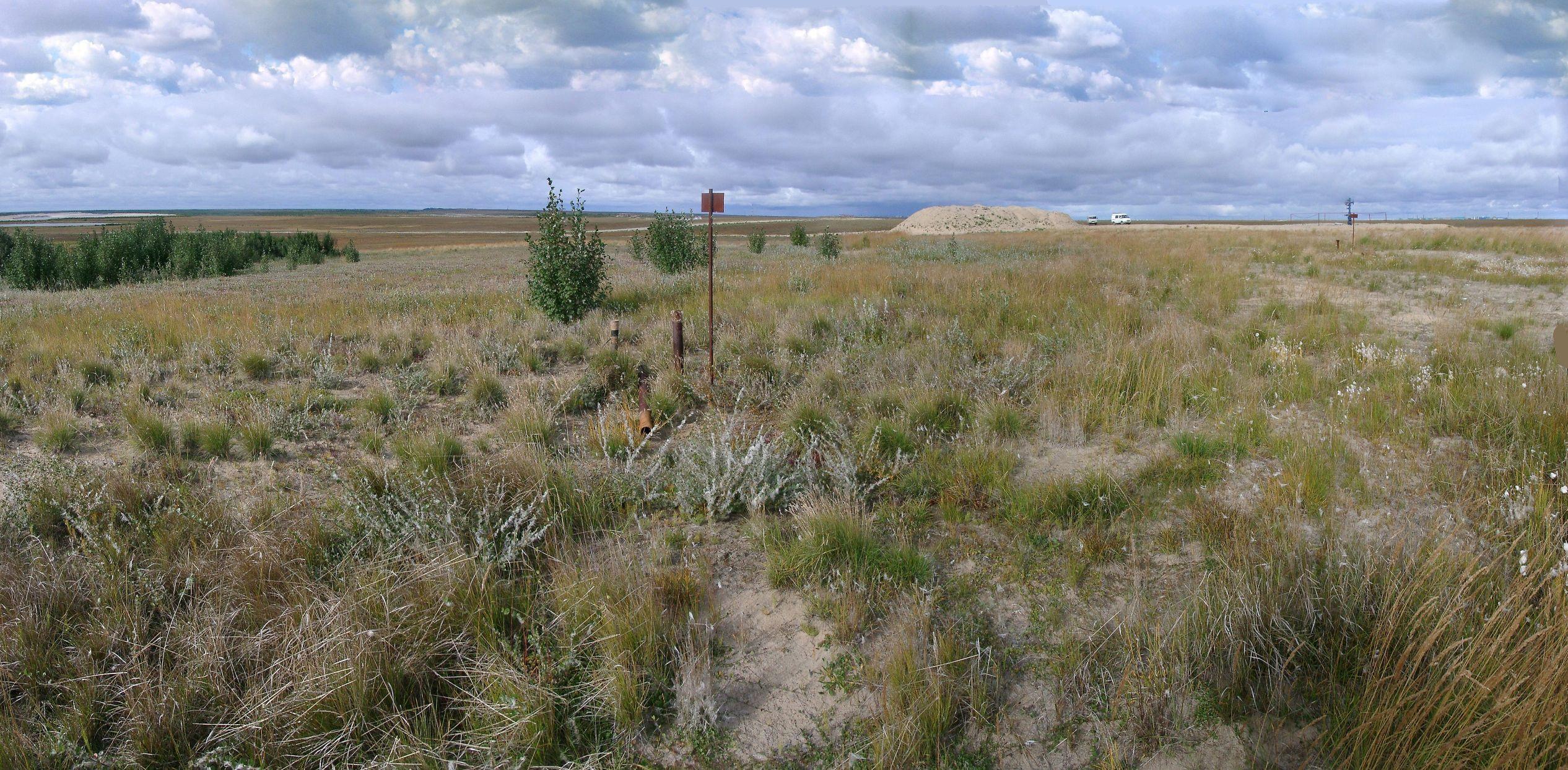 soil temperature observations in tundra (Taz peninsula)